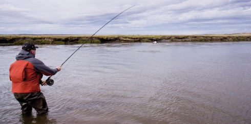 Sea Trout Jumping Rio Grande Argentina
