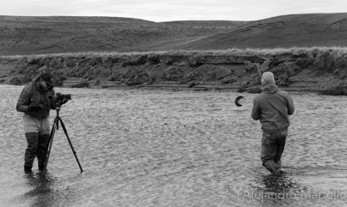 Villa Maria Sea Trout Filming